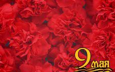 9 мая Красные гвоздики