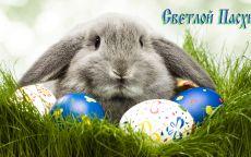 Пасхальный кролик и яйца