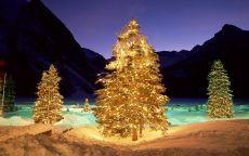 Наряженные новогодние елки