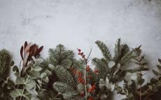 открытка, поздравление, новый год, елочные ветки, белый фон, с новым годом, снег