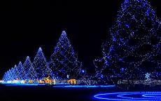 красивые светящиеся гирлянды на елях