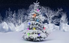 новогодняя ель в снегу