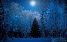 ночной новогодний лес
