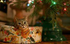 милый котик под новогодней елкой