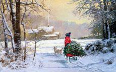 мальчик на санках везет рождественскую елку