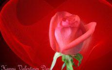День Святого Валентина Роза