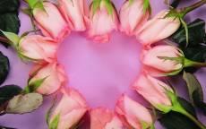 Открытка, день святого Валентина, сердце, розы, розовый фон