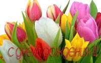 С Днем Рождения тюльпаны в росе