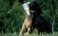 Любовь Лошади