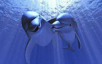 Любовь Дельфины под водой