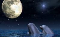 Любовь Дельфины и луна