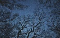 ночь, звездное небо, лес, силуэты деревьев