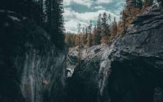 дикая природа, скалы, ущелье, ели, лес