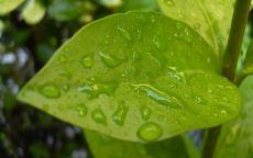 Роса на зеленном листе