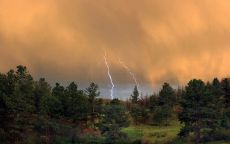 Молния бьет в деревья в лесу.