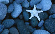 Белая звезда на камнях