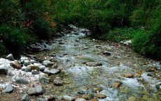 Каменистое дно ручья