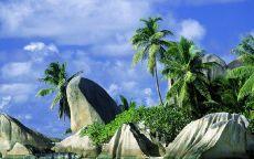 Камни и пальмы