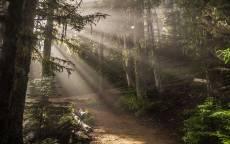 лучи солнца в лесу, туман в лесу