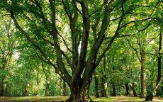 Ветвистое дерево на поляне