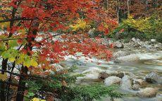 Лесной ручей осенью