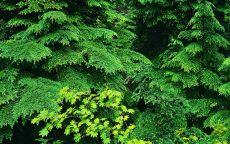 Начало леса
