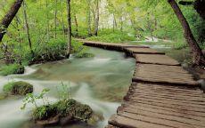 Мост над лесным ручьем