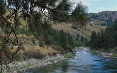 Хвойный лес на берегу реки