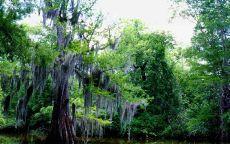 Старое дерево в лесу