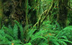 Папоротник в лесу