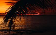 вечер, тропики, пляж, море, пальма