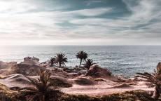 тропики, море, океан, берег с пальмами