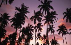 Пальмы на фоне вечернего неба