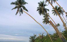 Пальмы нагнулись к воде