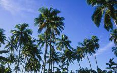 Зеленые пальмы и синее небо