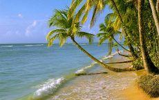 Изогнутая пальма на пляже