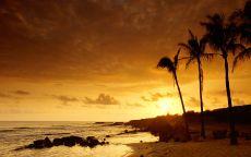 Вечер и пальмы