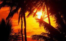 Вечернее солнце в джунглях