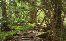 Тропинка в джунглях
