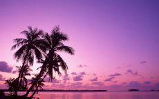 Вечер в тропиках