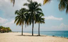 Тропики, пляж, океан, три пальмы, тень, бунгало