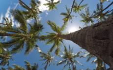 Тропики, пальмы вид с низу, облако, небо, солнце