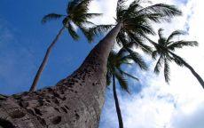 Ветер и пальмы