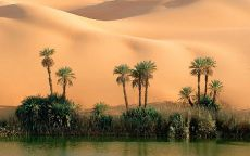 Оазис и песчаные барханы