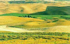 Зеленое поле в пустыне