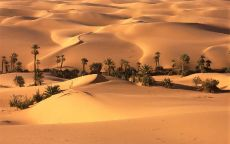 Оазис в пустыне