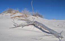 Мертвое дерево в пустыне