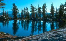 Ели на берегу горного озера