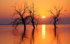 Мертвые деревья в озере