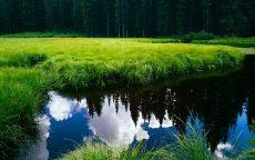 Спокойная вода